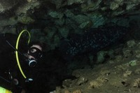 Trimix Diver and Coelacant - Jesser Canyon, Sodwana Bay