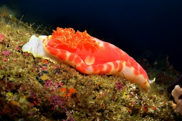 Djibouti Giant found at Gotham City on 5 Mile Reef