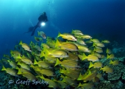 Scuba Diving with Geoff Spiby at Triton Dive Lodge 2014 Gallery