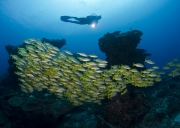 Scuba Diving with top photographer Geoff Spiby in February with Triton Dive Lodge